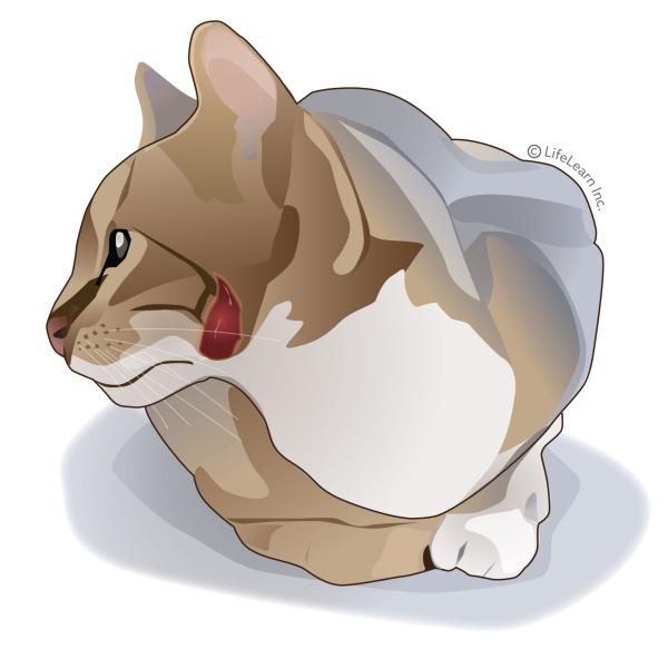 cat_open_wound_2018-01