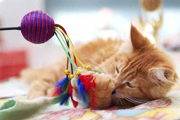 kitten_play_1