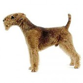Photo of Lakeland Terrier