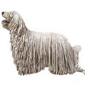 Photo of Komondor