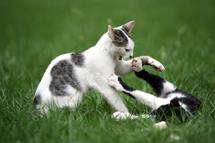 cat-_cat_fight_small