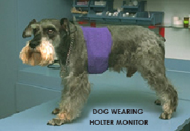 holter_monitor_in_dogs-1