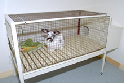 rabbits-housing-1