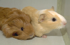 rodents-feeding-1