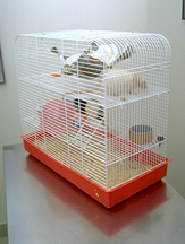 rodents-housing-2