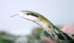 snakes-feeding-1