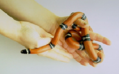 snakes-owning-2