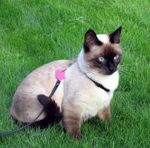 cats_perils-of-outdoor-living2