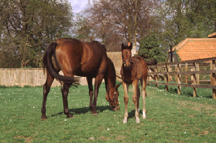equine_herpesvirus_infection-1