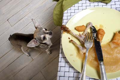 adverse-reactions-to-food-in-dogs