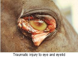 eye_emergencies-2