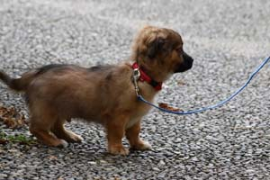 picture of a puppy on a leash