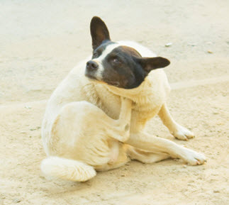 first_aid_for_hot_spots_in_dogs