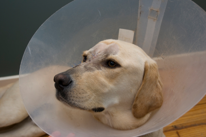 first_aid_for_hot_spots_in_dogs2