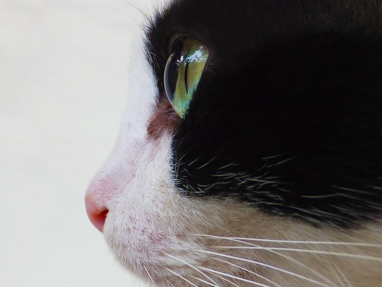 cat-123343_1280