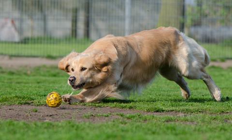 dog-behavior-normal