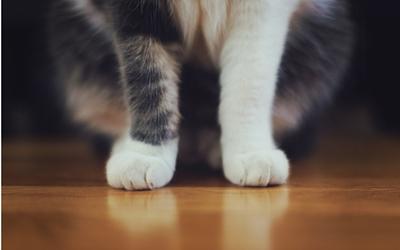 cat_paws_1