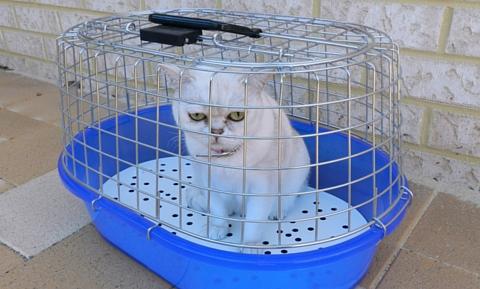 prep_for_vet_trip-_cats