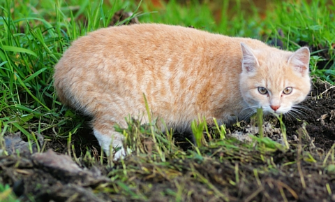 first_aid_for_insect_stings_in_cats