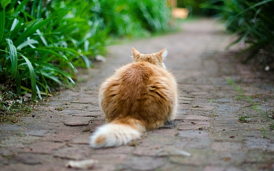 first_aid_for_injures_cat_tails