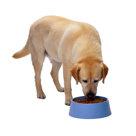 behavior_modification__working_for_food__dogs_and_cats_2