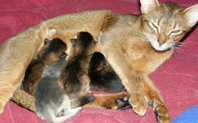 feeding_nursing_cat