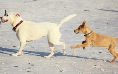 dog_to_human_years