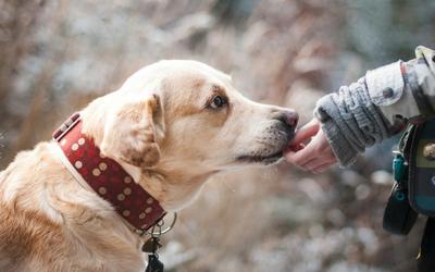 resp_dog_owner