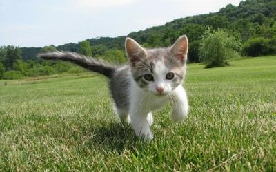 pad_-_kitten
