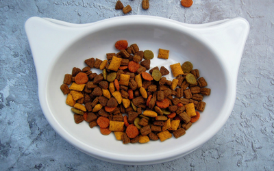 allergies_in_cats_food