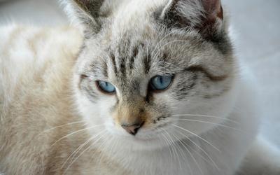 nebulization_coupage_cat