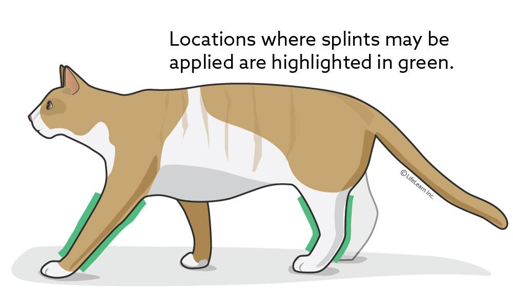cat_splint_location_2018-01