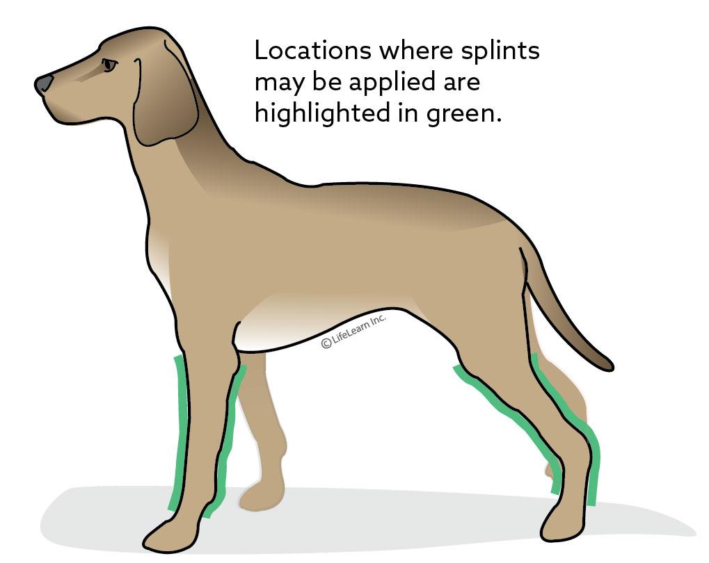 dog_splint_location_2018-01
