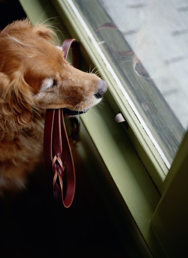 separation_anxiety_in_dogs_-_synopsis_1
