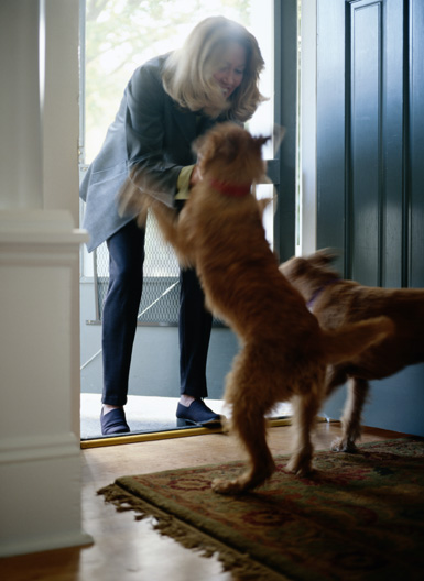training_in_dogs__greeting_behavior_door_charging
