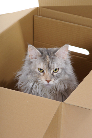 moving_with_your_cat