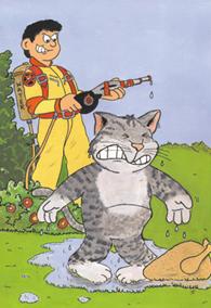 undesirable_behavior_in_cats