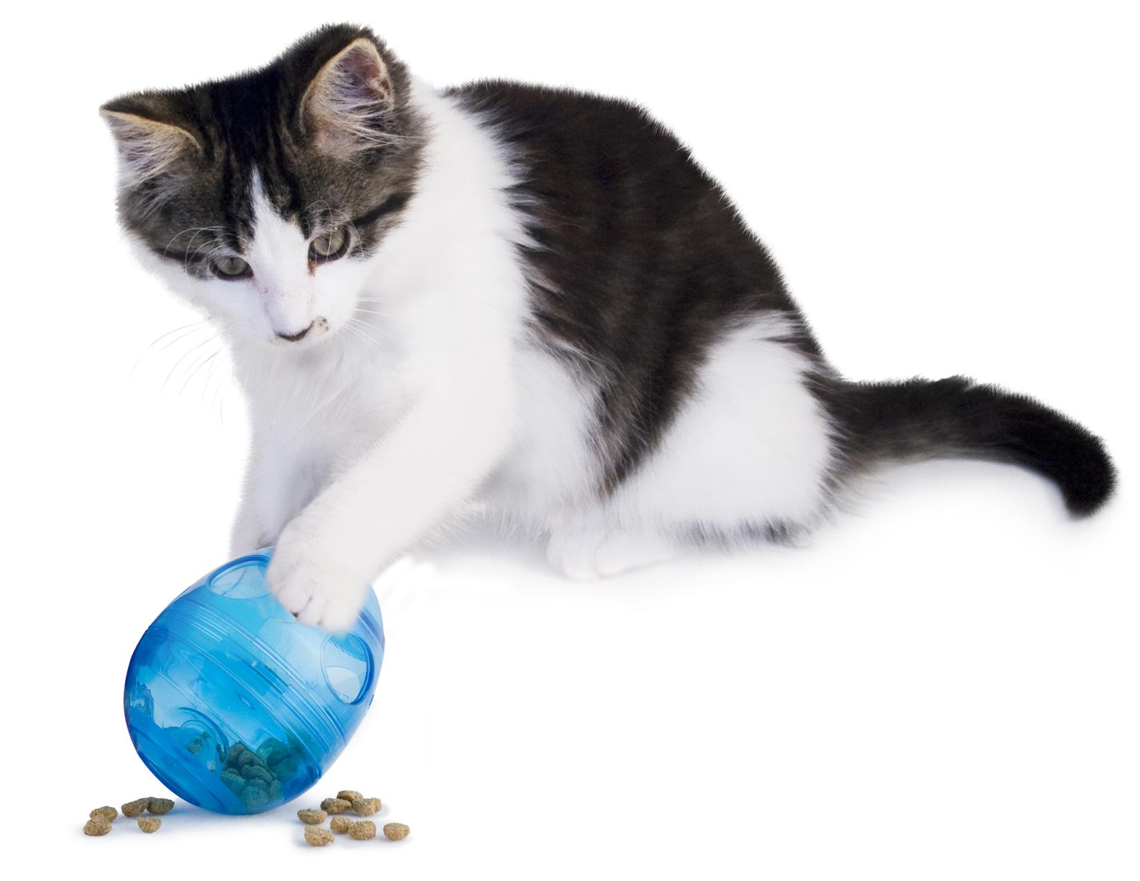cat_behavior_3