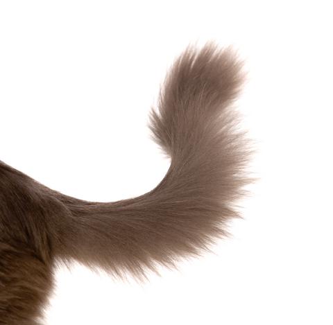 compulsive_disorders_in_cats_2