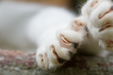declawing_in_cats__behavior_1