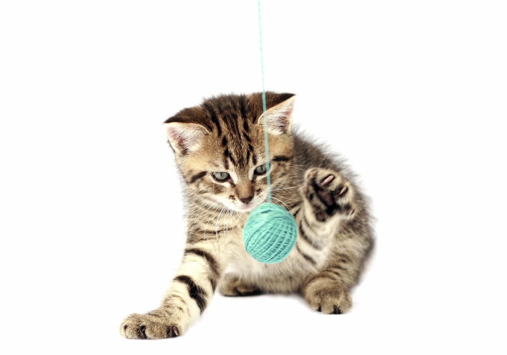kitten_play_4