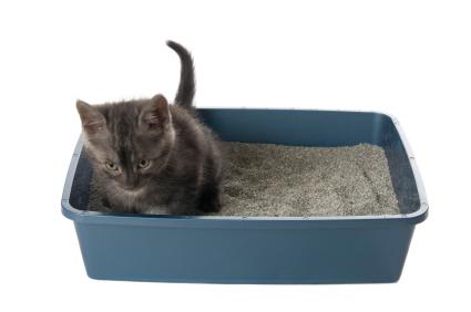 kitten_-_using_the_litterbox_1