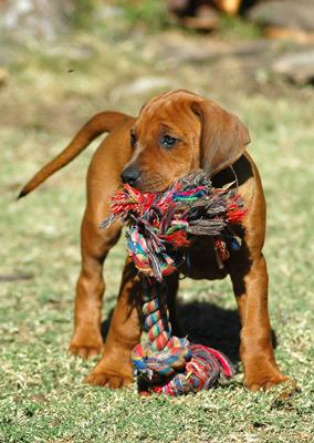 puppy__play_biting_5