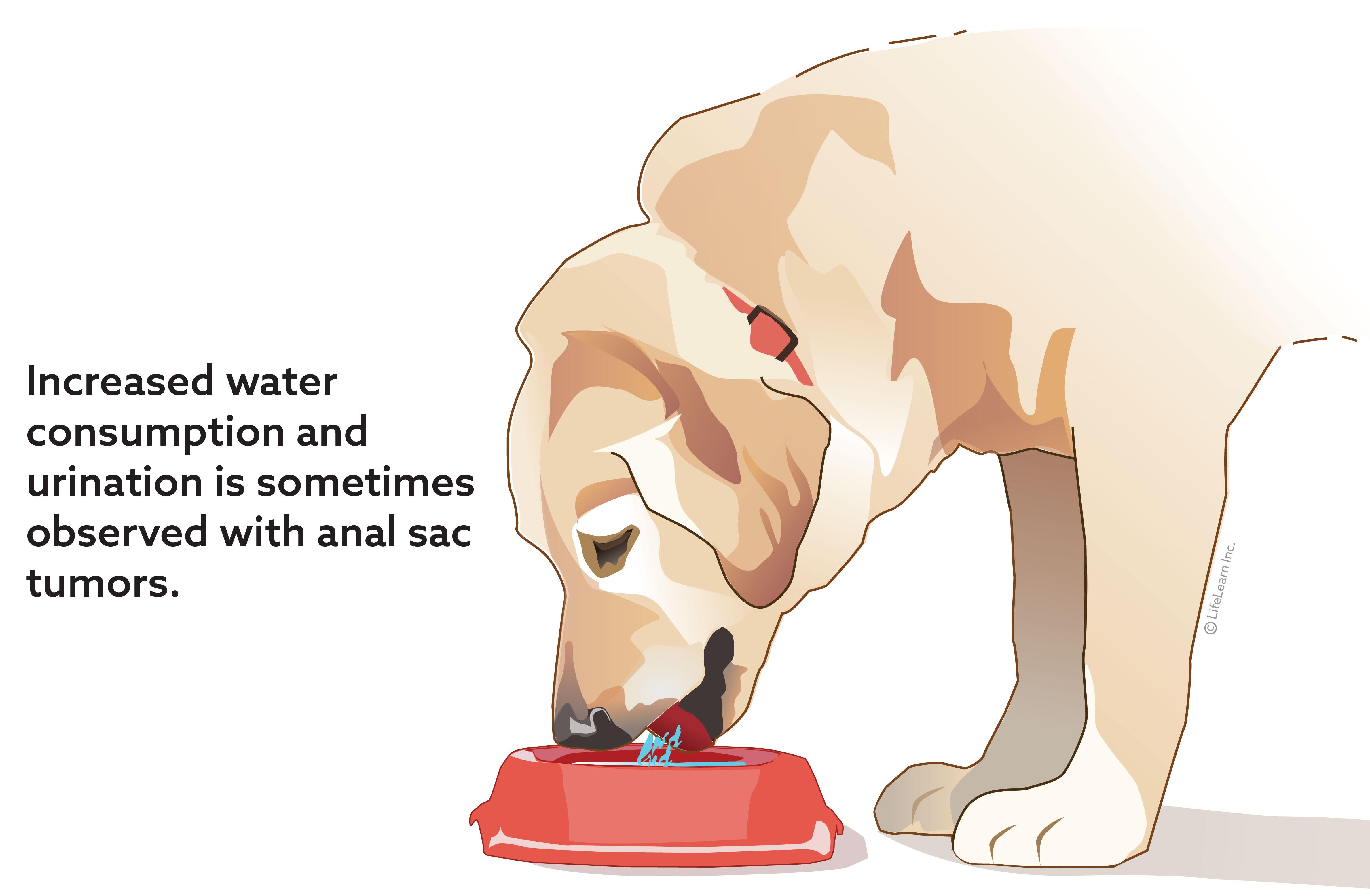 dog_drinking_anal_sac_tumor_2018