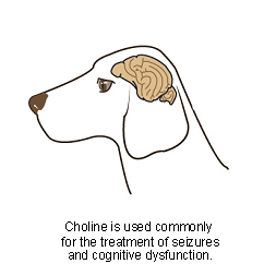 choline-1