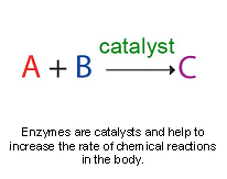 enzymes-1