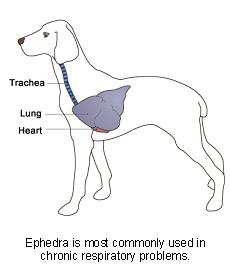 ephedra-2