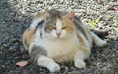 diabetes_cat