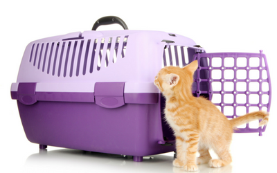 moving_new_home_cat_carrier