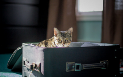 moving_new_home_cat_suitcase